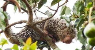 Ceará lança lista inédita de animais encontrados no estado