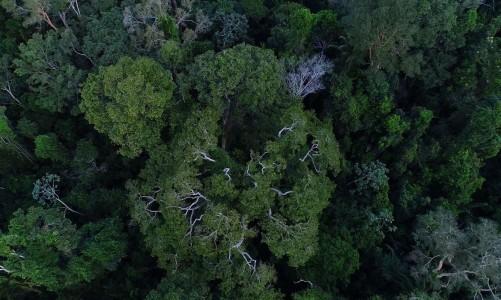 floresta_amazonica_vista_de_cima