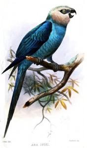 litografia_feita_por_joseph_smit_em_1878 (294 x 500)