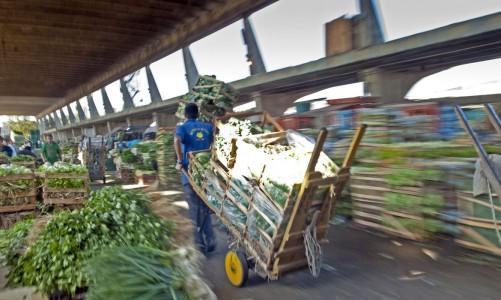 Ceagesp, uma cidade que alimenta o Brasil