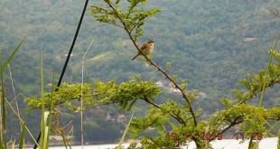 Recuperação mata atlântica/ fauna/ flora