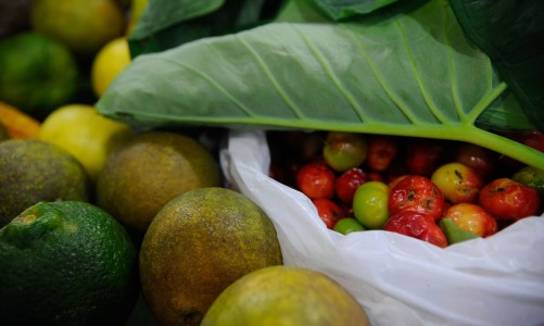Conferência Green Rio 2015 discute estratégias para a economia verde e o setor de alimentos orgânicos no Jardim Botânico (Fernando Frazão/Agência Brasil)