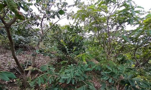 Projeto refloresta propriedades rurais em área de Mata Atlântica