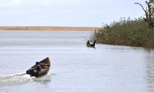 Mariana: pesquisadores encontram metais tóxicos em peixes do Rio Doce