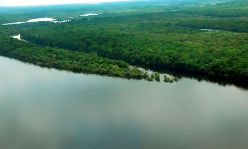 Caixa vai repassar R$ 150 milhões para preservação de florestas
