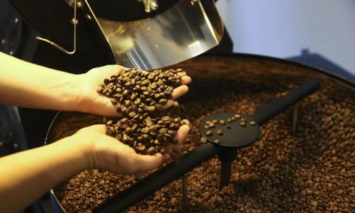 Pequenas torrefações preparam grãos especiais de café